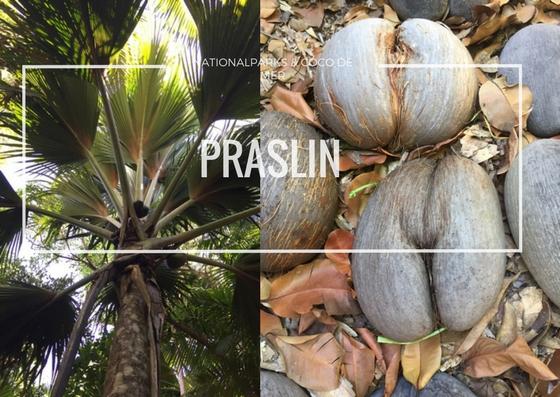 Praslin Nationalpark und Coco de Mer