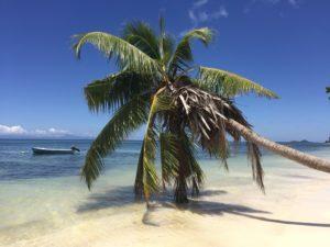 Palme mit Meerblick auf Praslin