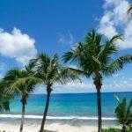 Palmen in einer Reihe mit Blick aufs Meer am Strand Anse Intendance auf Mahe, Seychellen